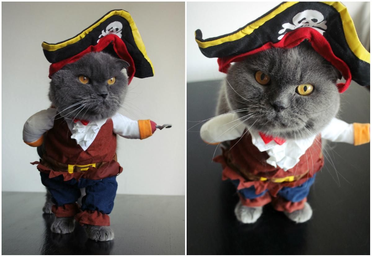 kattekostume til børn