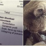 Hvad koster verdens sureste kat?