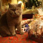 Repost: Den gode julegave på budget