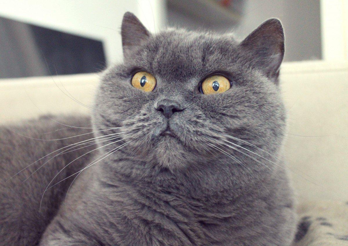 kraesen-kat-og-agurkemangel0